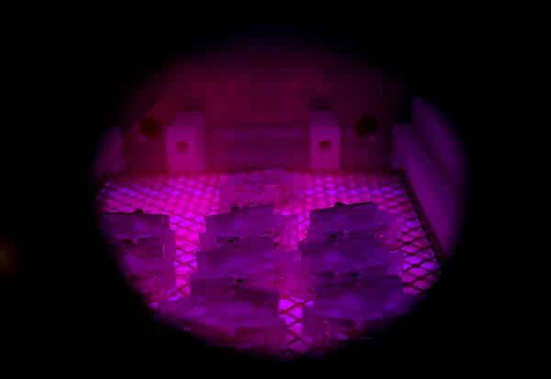 Hans Wittich - CASE Tantec Plasma für LED Navigationslichter Bild 2
